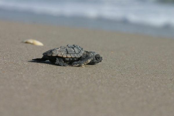 sea turtle florida