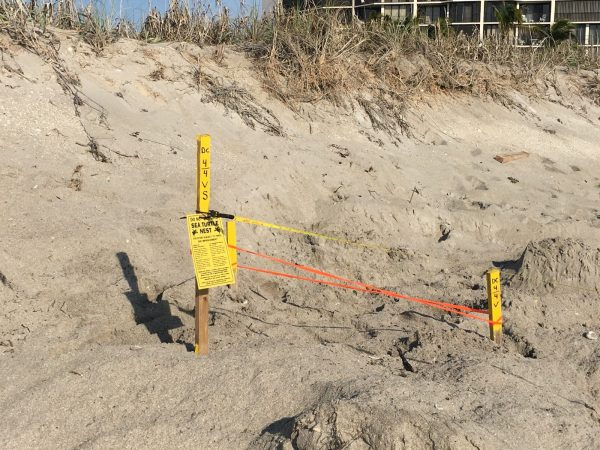 protected sea turtle nest